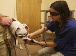 Photo of Class IV Laser Therapy
